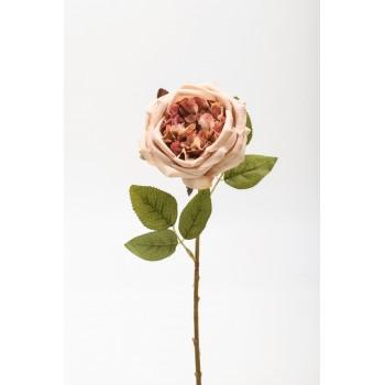 Κλαδί τριαντάφυλλο μαγιάτικο
